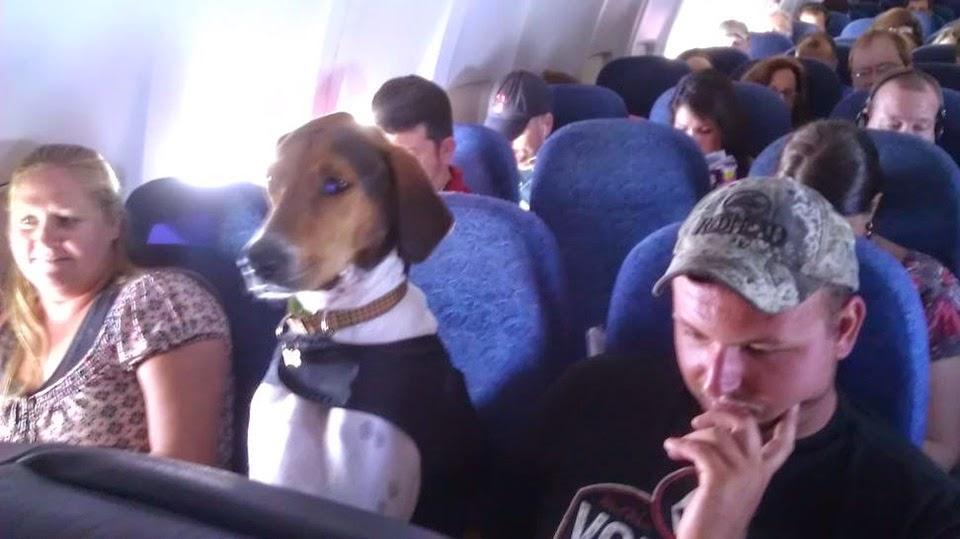 Aerolineas permitira viajar con mascotas en la cabina
