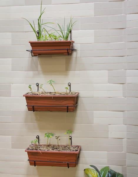 horta em jardim vertical : horta em jardim vertical:Lord Flores: CULTIVANDO MINI-HORTAS