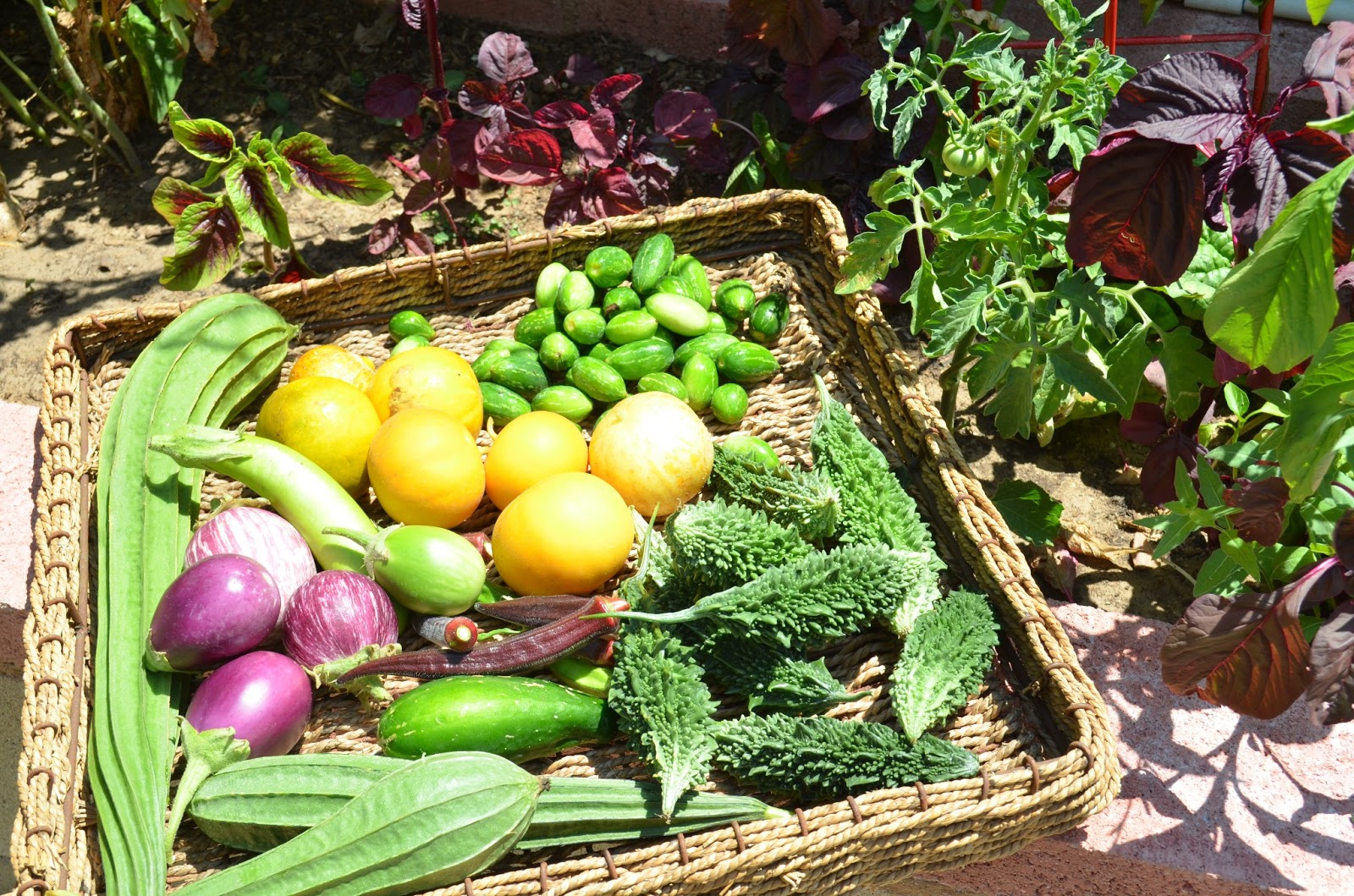 Planning A Kitchen Garden Entertaining From An Ethnic Indian Kitchen Kitchen Garden Harvest