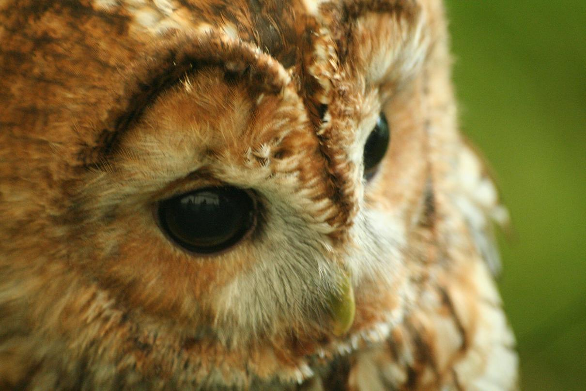 Ryan Birchall Photography: Close up Animal Photography