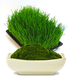 Barley Grass - Results Personal Training