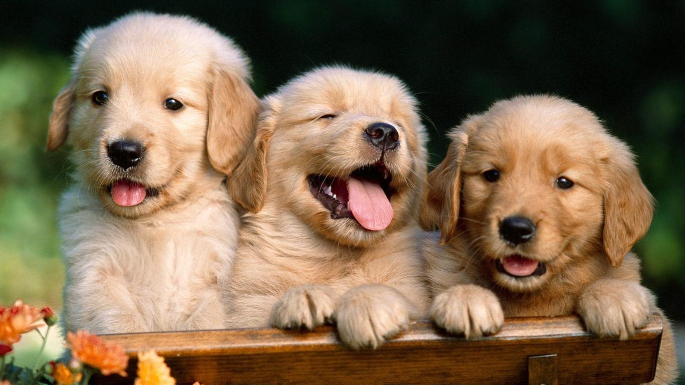 http://1.bp.blogspot.com/-VBIMzEs7H84/T6twEuMATSI/AAAAAAAABiE/cbe_lphU6Bg/s1600/wallpaper-cute-puppy3.jpg
