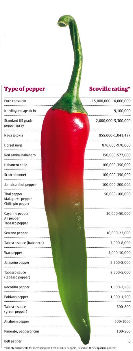 KumoCafe: History of the Chili [Pepper]