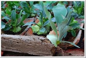 Viveros Iabiti, planta ornamental
