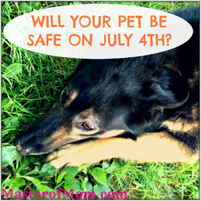 dogs, dog safety, pets on 4th of July, 4th of July celebrations, pets in animal shelters, nervous dog, scared dog, my dog ran away