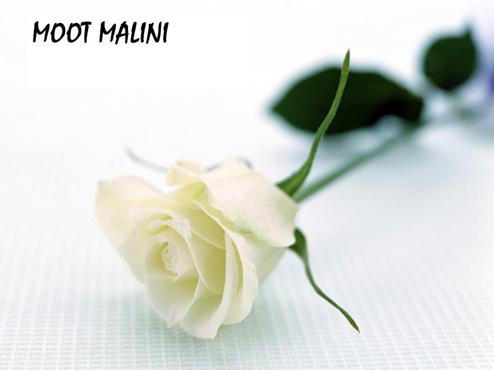 MOOT MALINI