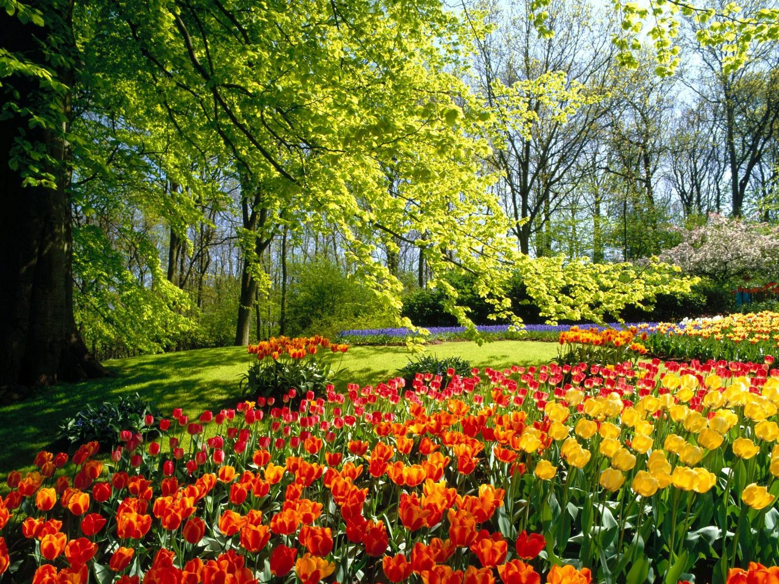 весна обои: