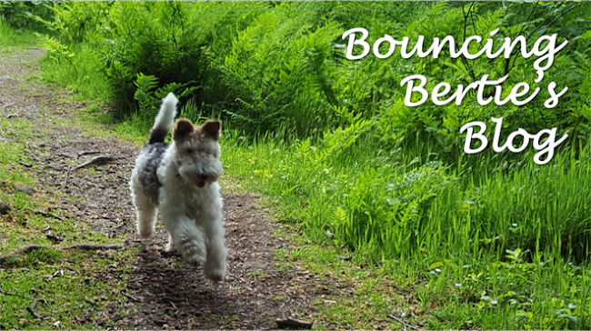 Bouncing Bertie's Blog