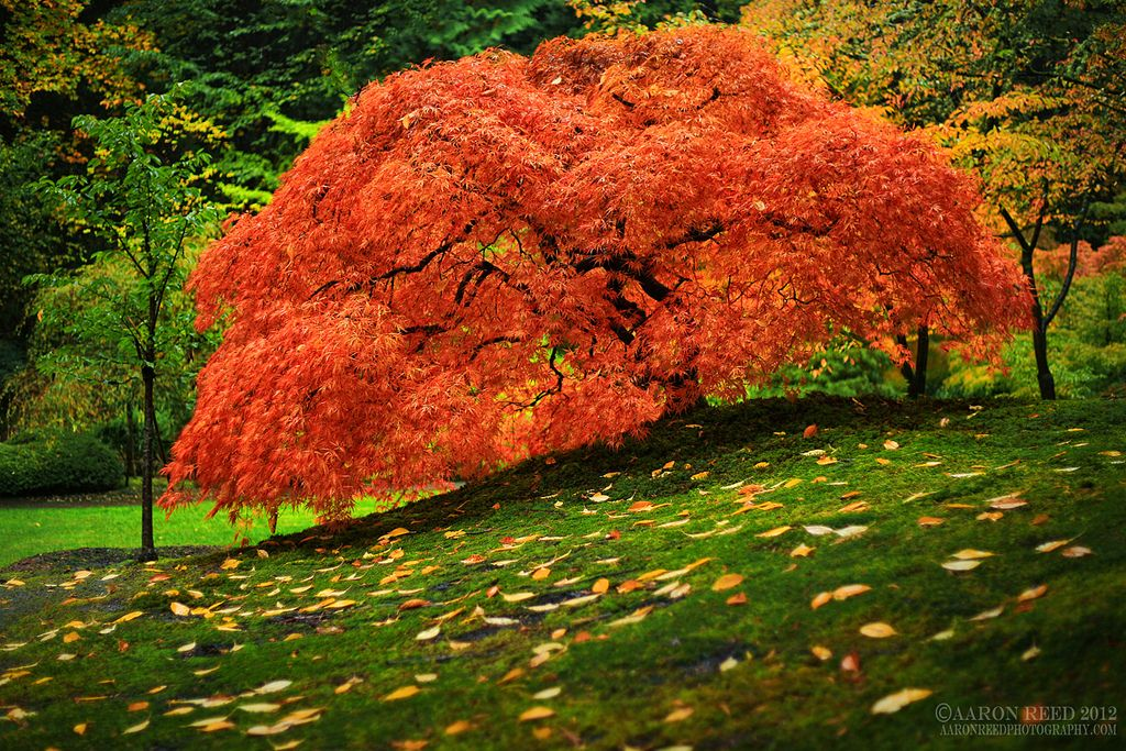 27.The Life Of A Tree by Aaron Reed