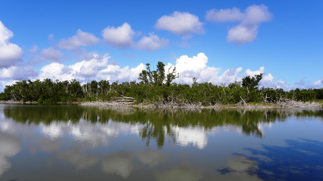 Eco Pond Everglades