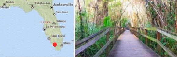 Big Cypress Bend Boardwalk Nationalpark Florida