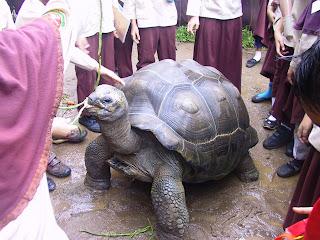wisata edukasi kura kura raksasa godongijo
