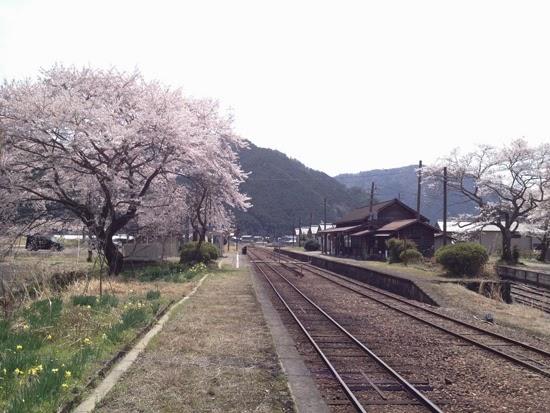 桜満開 長良川鉄道 大矢駅