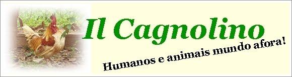 IL CAGNOLINO