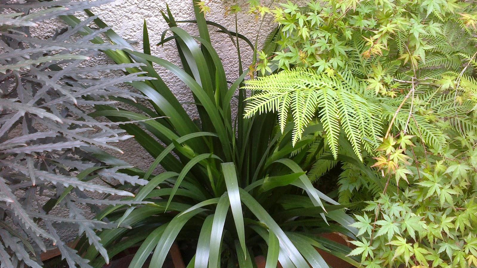 Reverdir jardineria y paisajismo plantas de interior for Jardineria y plantas