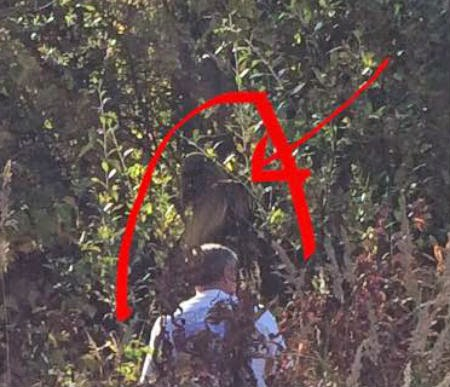 alaska bigfoot hunters