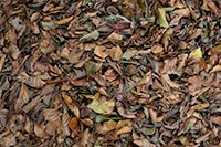 Dry leaves and river stones texture package