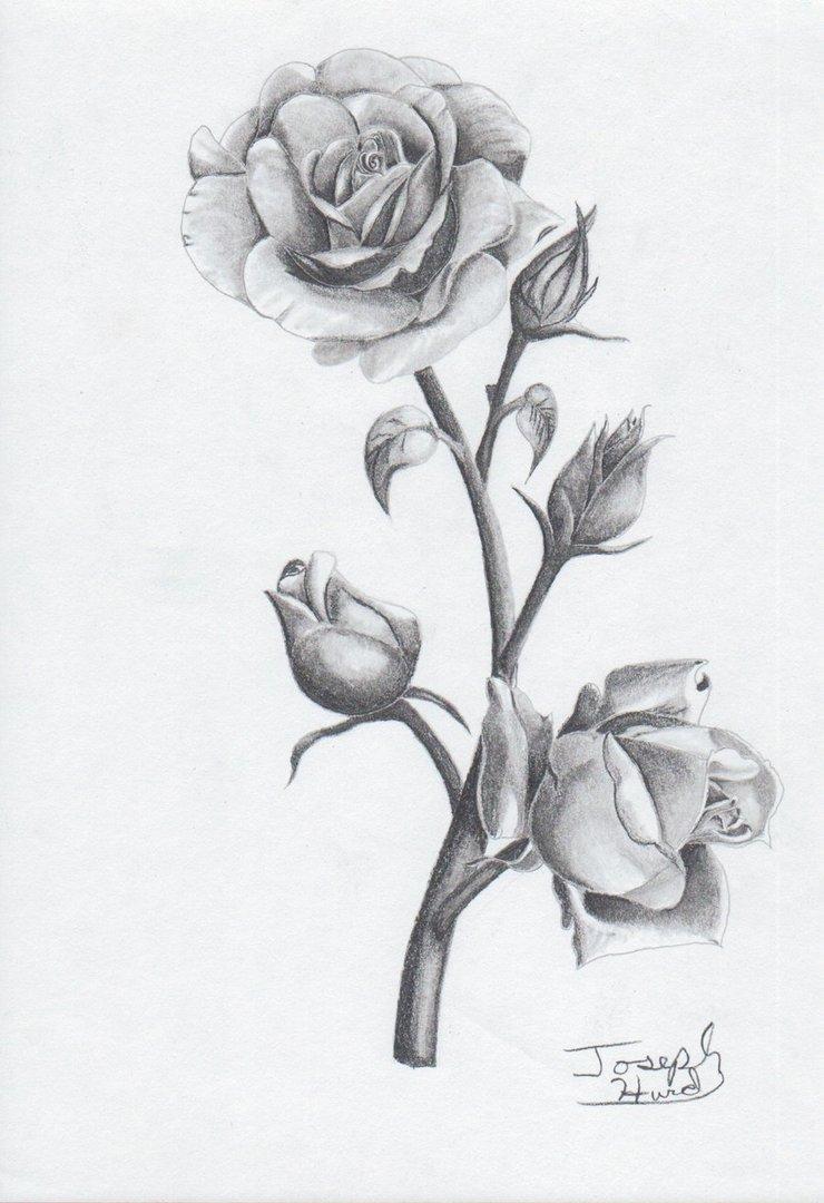 griffe tattoo s rosas para tatuagens feminina. Black Bedroom Furniture Sets. Home Design Ideas