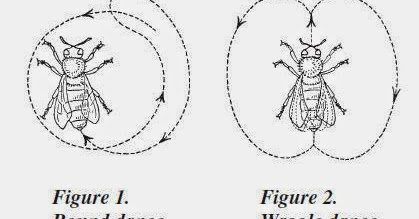 the communication among honeybees Honey bees are available in many races, such as italians, russian, cordovan and carniolan this article looks at the suitability of the characteristics that differ among the various races of honey bees are subtle, but can make a difference in the success or.