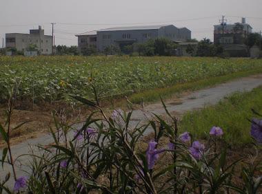 2012/9/13 向陽農場