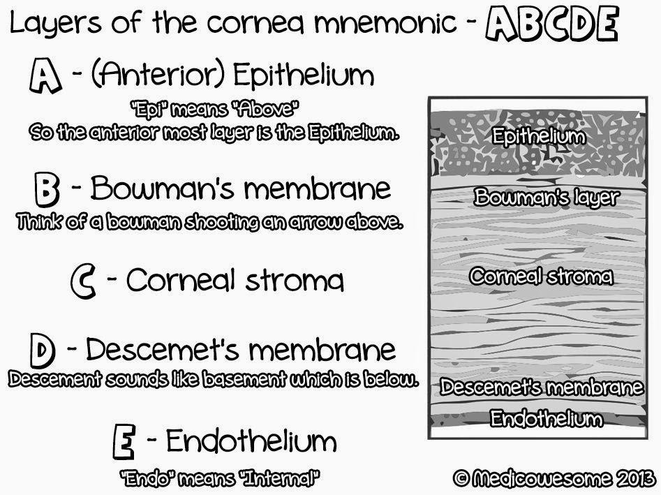 Medicowesome Layers Of The Cornea Mnemonic