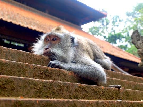 monkey sanctury Bali
