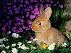 Cual es la caractersitica de un conejo?
