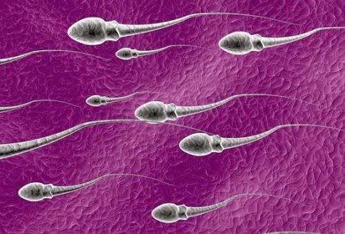 Hukum onani - ilsutrasi sperma