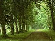 17 Lindas Paisagens Naturais. (caminho de rvores)