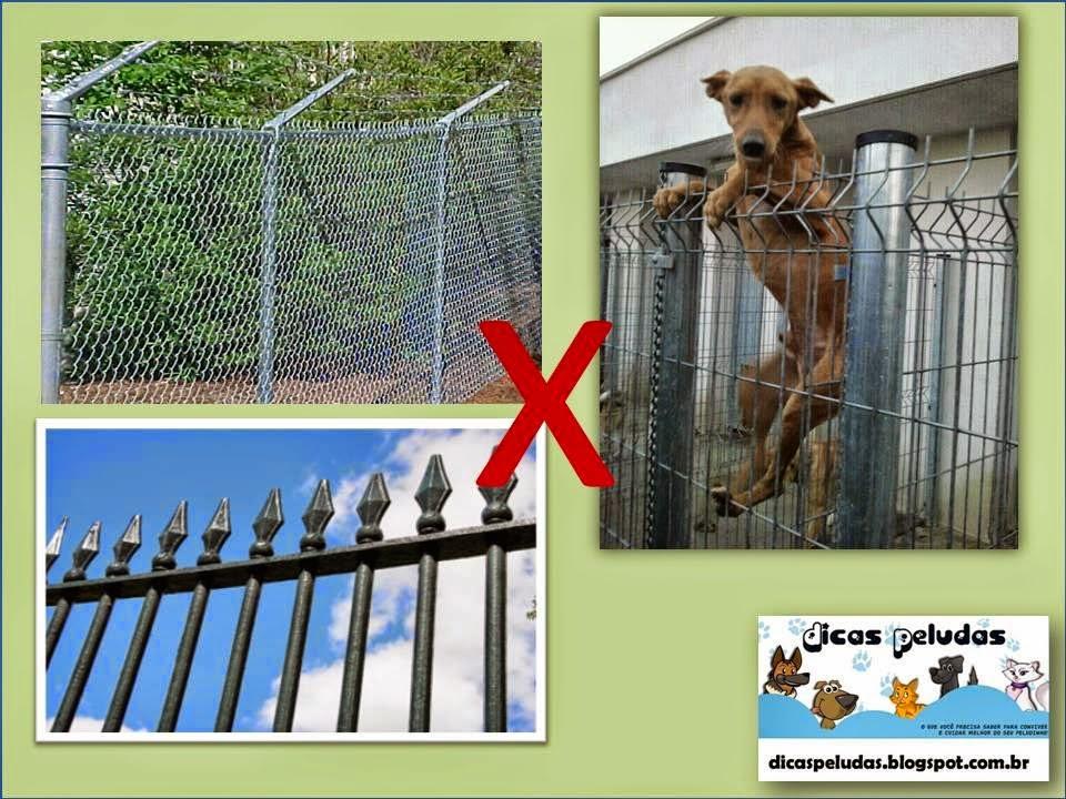 cerca jardim cachorro : cerca jardim cachorro: seja capaz de passar seja por cima, por baixo ou através da cerca