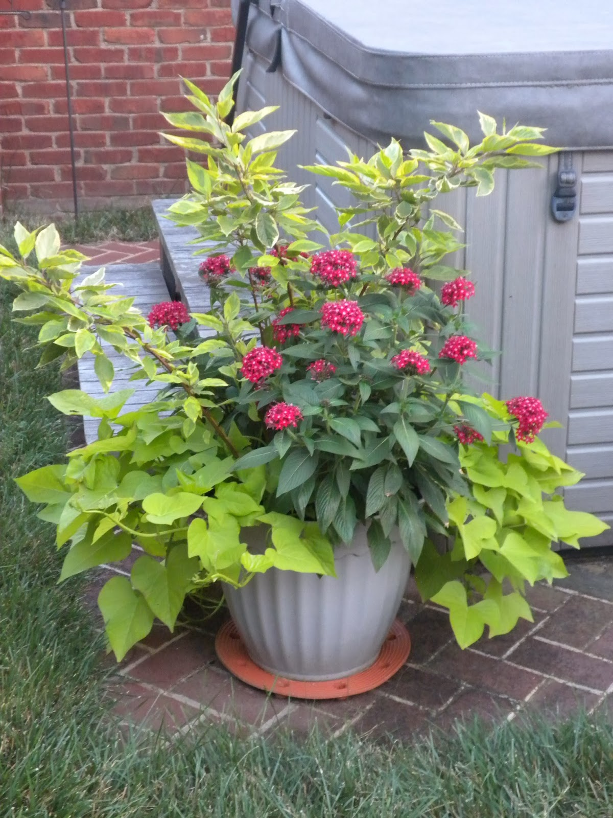 A Gallery of Beautiful Container Garden Ideas | Better ...