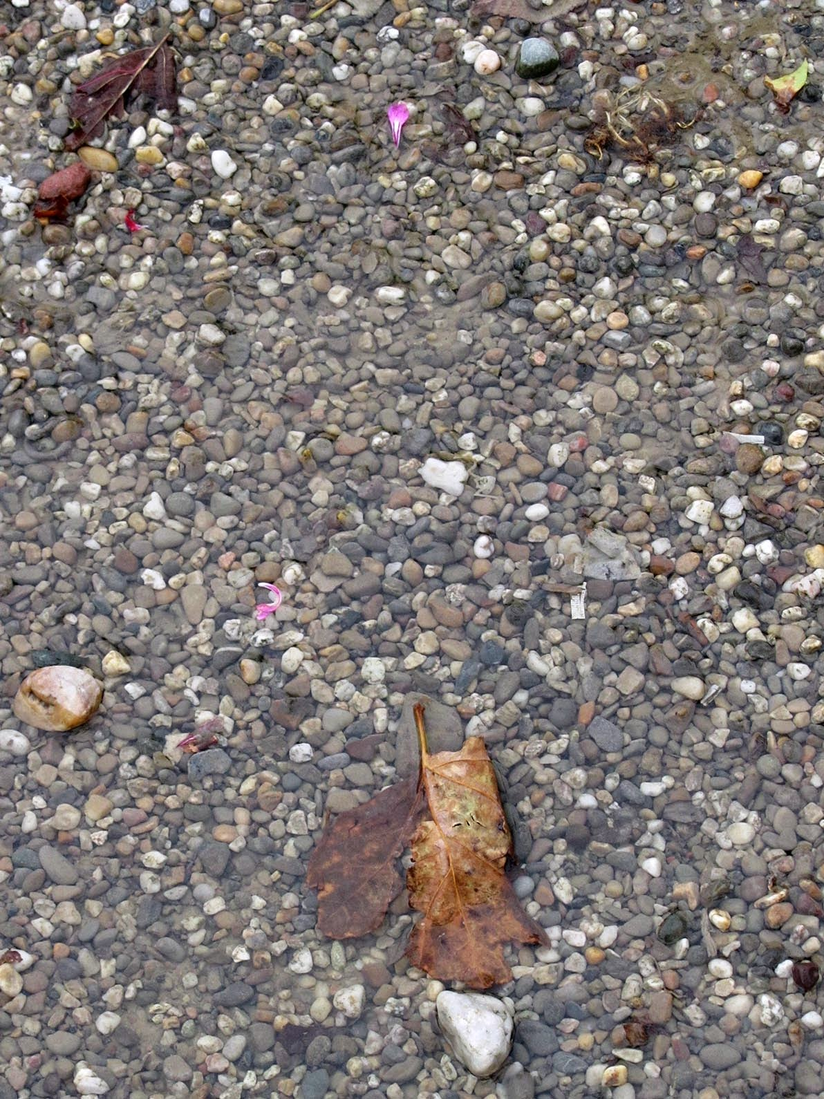 gravel, water and leaves