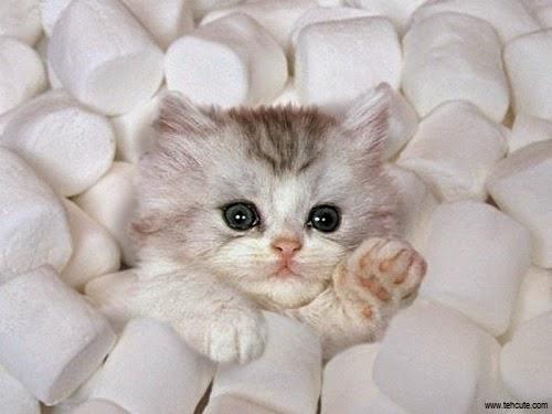 Des Photos de chatons, bébés chat