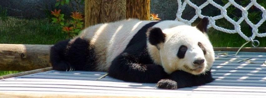 Une couverture facebook panda 02