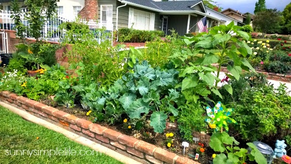 garden tour 2015, urban farm, city vegetable garden, organic, vegetable garden