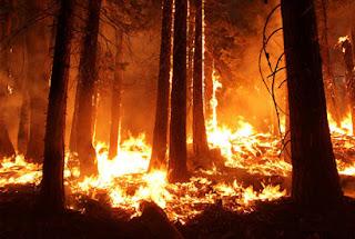 Jenis Kebakaran Hutan