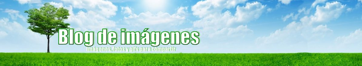 Blog de imgenes