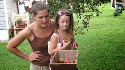 child helping add apples into cider press