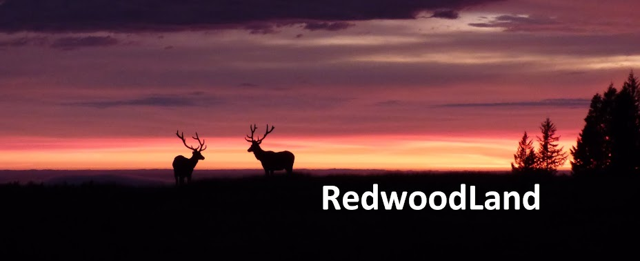 RedwoodLand