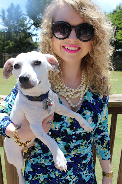 Ann Taylor, J. Crew, Coach, Ivanka Trump, pearls, lawyer, lawyer lookbook, lawyer fashion, professional style, fashion blog, Nashville Humane Society, animal adoption, rescue dog, Jack Russell Terrier