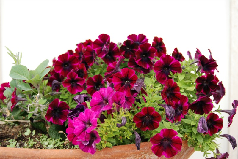 buon weekend fiorito vaso