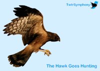 TwtrSymphony The Hawk Goes Hunting