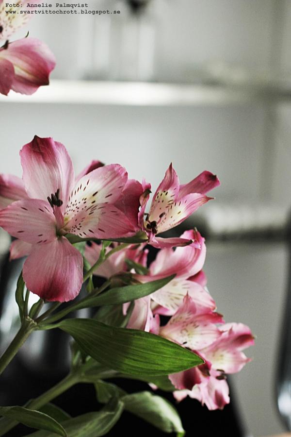 helgblomma, helgblommor, fredagsbukett, blomma, snittblommor, rosa,
