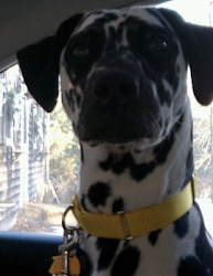 My Roxy