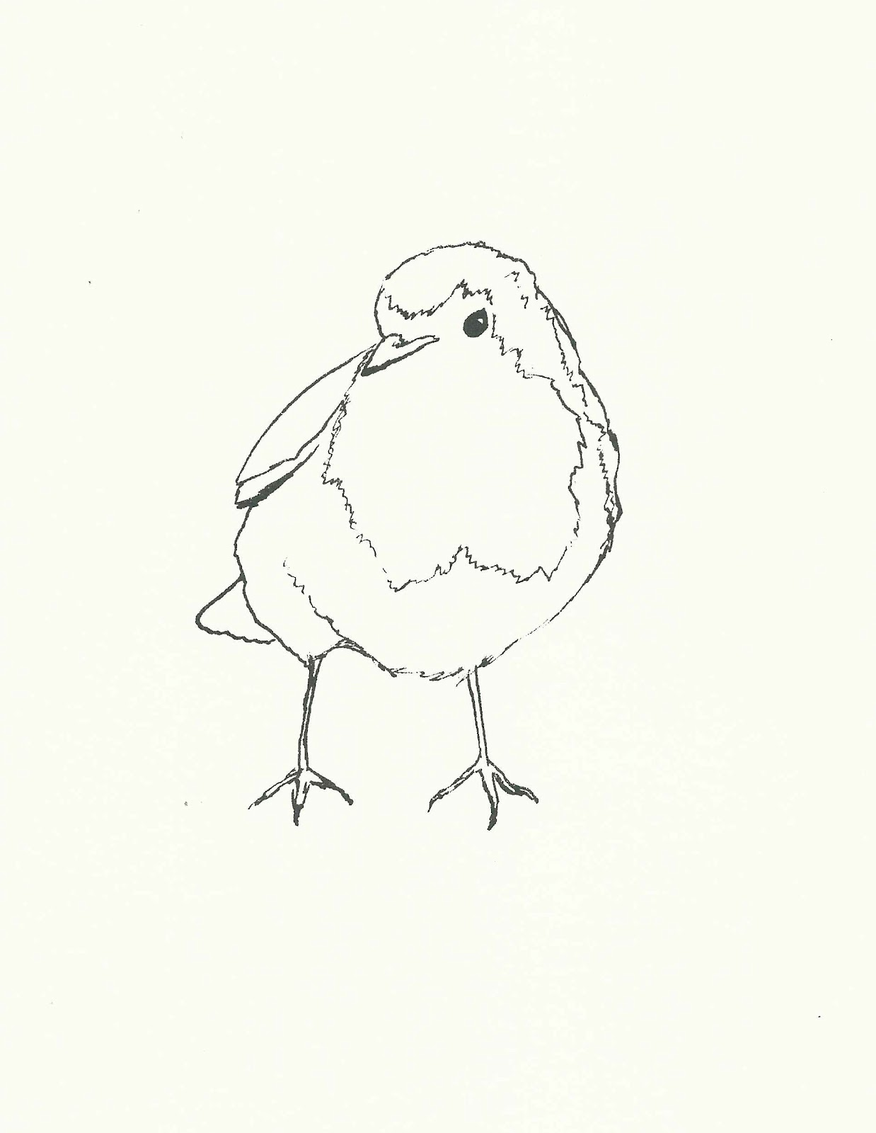 Line Drawing Robin : Kathleen meaney illustration garden birds screenprints