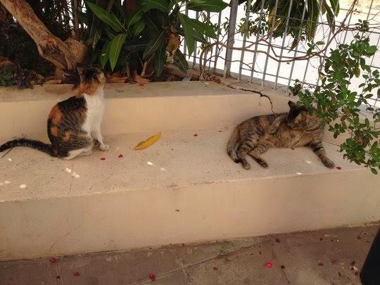 Banjul airport cats
