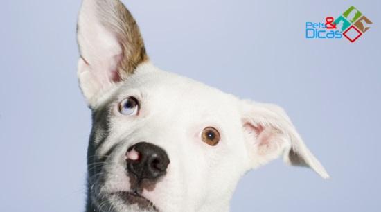 Cão com dor de ouvido