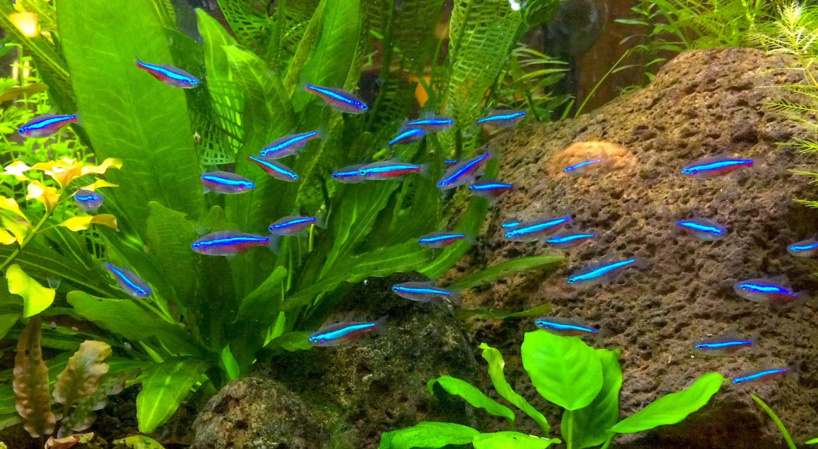 Blok888 top 10 most beautiful freshwater fish in the world 2 for Colorful freshwater aquarium fish
