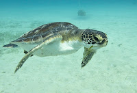 Let the turtle swim... dont touch