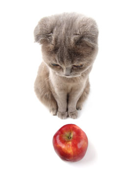 The IPKat: Apple and IKEA in China: is it just a matter of ...